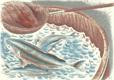 Ryba v kádi