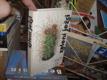 Zelení ježci - kaktusy