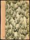Kuhúk - chvojnický výr