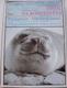 Cousteau Jacques-Yves - Život na konci světa - Patagonie, Ohňová země, Magalhaesovo souostroví