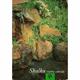 Skalka – ozdoba zahrady