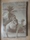 Poušť a oasa (Nová Arabie)