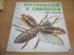 Entomologie v obrázcích