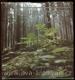 Z šumavských lesů