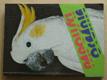 Papoušci oceánie (1982)