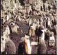 Antarktida na prahu konce. Z deníku skeptika