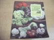 Neobyčejně z obyčejné zeleniny Sešity dom