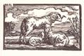 Beran, ovce a jehně