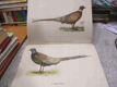 Naše lovné ptactvo