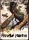 Pravěké ptactvo