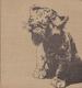 Příběh lvice Elsy od Joy Adamson
