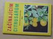 Začínajícím citrusářům (1990)