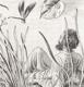 Bouda - NERUDA; JAN: PROSTÉ MOTIVY. - 1951. 4 celostr. mědirytiny CYRIL BOUDA; podpis CB; ruční papír. - 8404731209