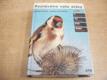Poznáváme naše ptáky podle zbarvení, velikosti, z
