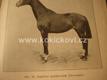 HIPOLOGIE NAUKA O KONI KRAČMAR 1923 LIPICÁN