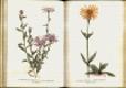 Chráněné rostliny I.