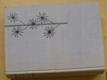 Vyšší rostliny (1961) Tracheophyta