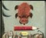 Medvídkův deník